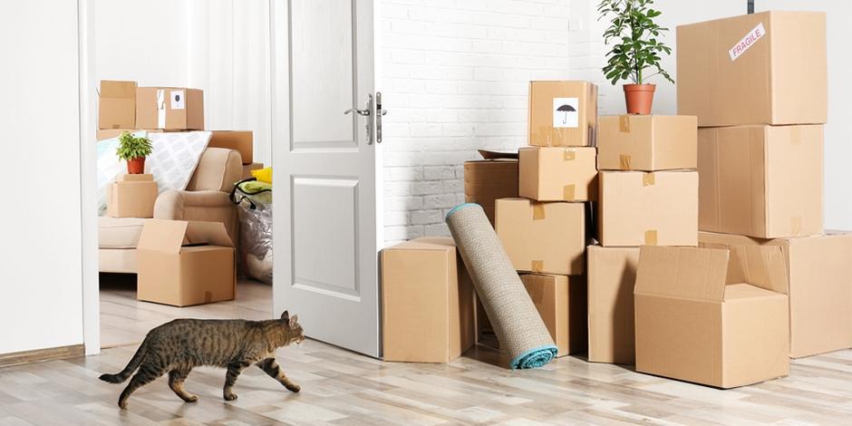 Особенности переезда в новую квартиру